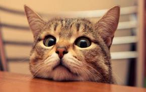 gato-con-cabeza-en-la-mesa-150_400x300