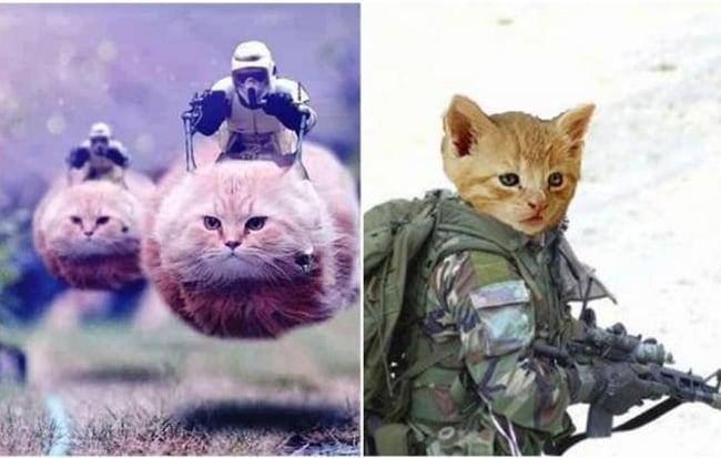 gatos-terrorismo-euribor