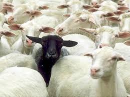 Dos ovejas negras de la bolsa española 1