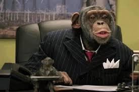 Un mono y unas recomendaciones 1