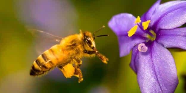 El Gobierno de Alemania prepara una ley específica para proteger a los insectos