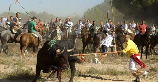 Supremo inadmite el recurso contra el decreto de la Junta que prohibió la muerte del Toro de la Vega