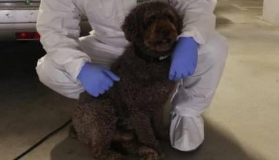 Muere Marley, el perro que participó en la búsqueda de Gabriel Cruz y Diana Quer