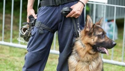 Una exhibición de perros policía en un instituto acaba con tres alumnos expulsados por posesión de drogas