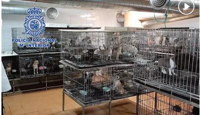 Detenen a dos veterinarios que habían cortado las cuerdas vocales a 270 perros para no alertar a los vecinos