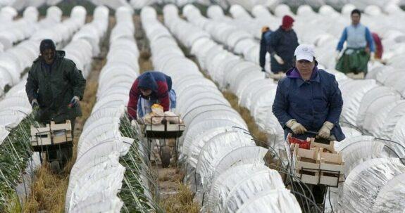 Los inmigrantes que trabajaron en el campo durante la pandemia tendrán autorización de residencia y trabajo dos años 1